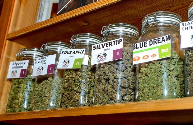 marijuana-Cannabis
