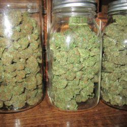 Top legit and genuine suppliers of Best medical marijuana like,Cannabis,  sour diesel etc at affordable prices available. Very good for patients of  cancer of all kinds.We await good customers. Worldwide Discreet Shipping Get a plug or texttt +17072788299  atlanticpharmacies@gmail.com