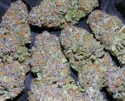 blueberrykush