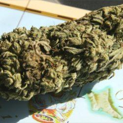 _weed_420_pics_11296635_1447398652229538_458055492_n